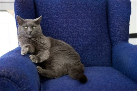 cats on couch removing pet urine smell from furniture thriftyfun