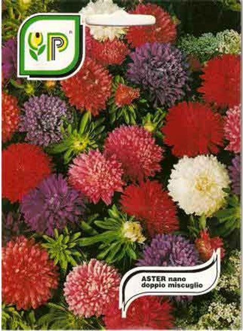 fiori da bordura astro nano da bordura in miscuglio semilandia