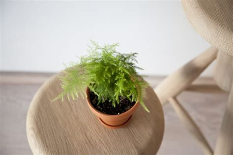 tiny potted plants plants in the shop at kitka design toronto