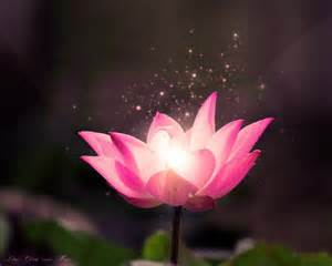 Lotus Buddhist Buddha Lotus Wallpaper Search Buddha