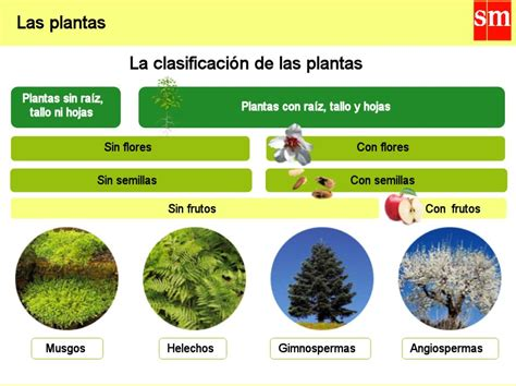 olguchiland las plantas ii ihmc public cmaps 2