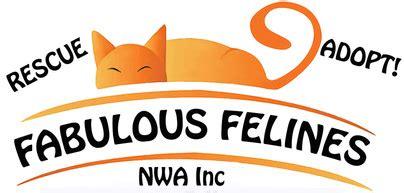 pug rescue of northwest arkansas pet shelters in bentonville ar