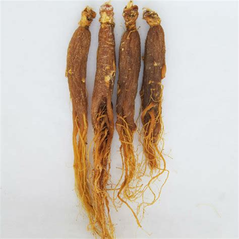 Akar Ginseng Merah beli set lot murah grosir set