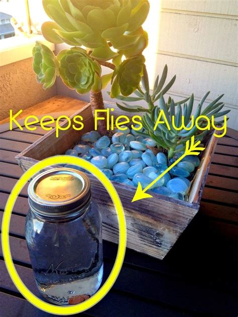 1000 ideas about keep flies away on pinterest get rid of flies pine sol and fruit flies