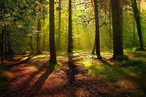 imagenes extrañas en el bosque historia de los bosques en espa 241 a