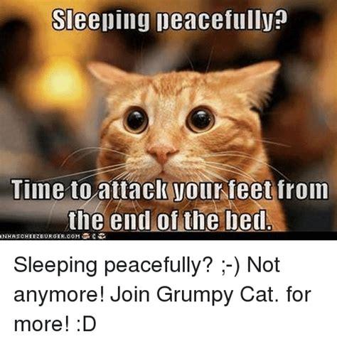 Sleeping Cat Meme - funny grumpy cat and sleeping memes of 2016 on sizzle