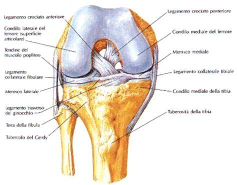 al ginocchio interno quando il ginocchio si consuma