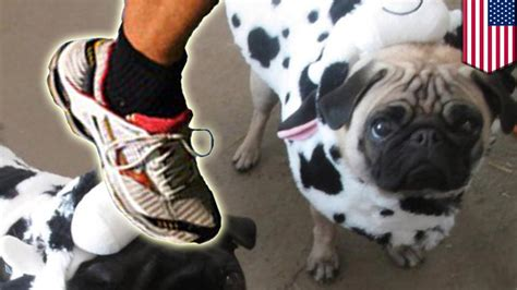 pug cruelty animal cruelty jogger kills pug with a kick to the in san francisco park