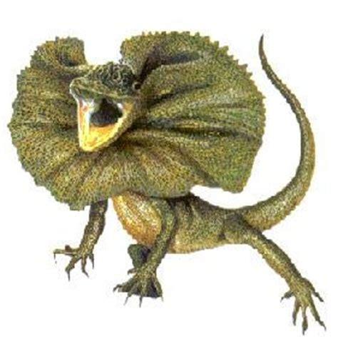 imagenes de animales reptiles animales reptiles