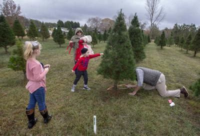hubbards christmas tree farm searching for the tree local news timesdaily