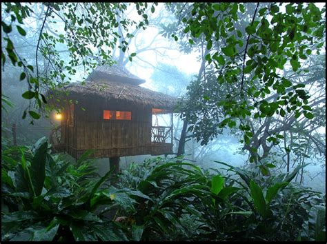tree house in jungle picture best house design amazing