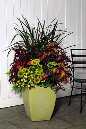 Design For Potted Plants For Shade Ideas Cool Container Garden Ideas Gardening
