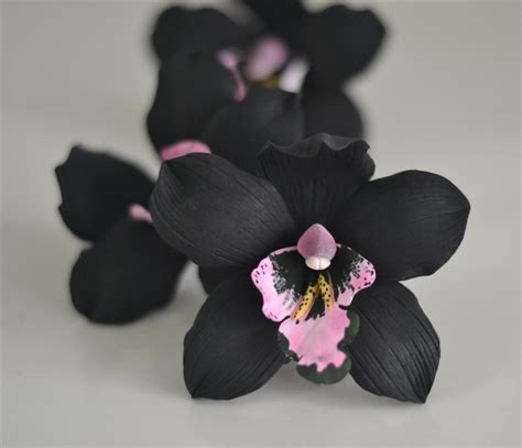 black orchid black orchid cakeart and sugarcraft