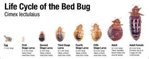 about bed bugs bed bug exterminator in nh bedbug solutions