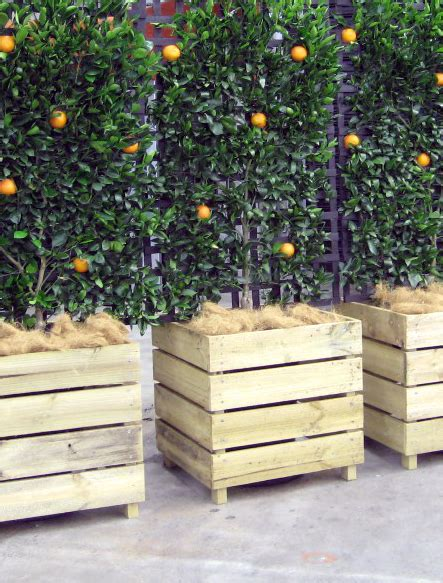 planters for trees espaliered fruit trees in wooden boxes if these were on