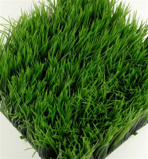 Mat Grass by Wheat Grass Mats 10 5in Square