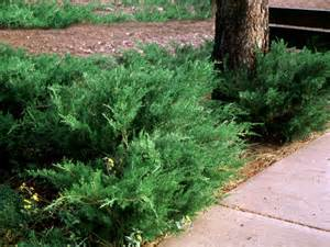 Bushes For Landscaping Popular Landscaping Groundcovers And Shrubs Diy Landscaping Landscape Design Ideas Plants