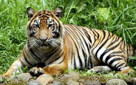10 hewan langka di indonesia amorists social community nature