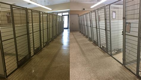 shelters in ohio adopt a thon empties shelter and finds homes for every and cat dogtime