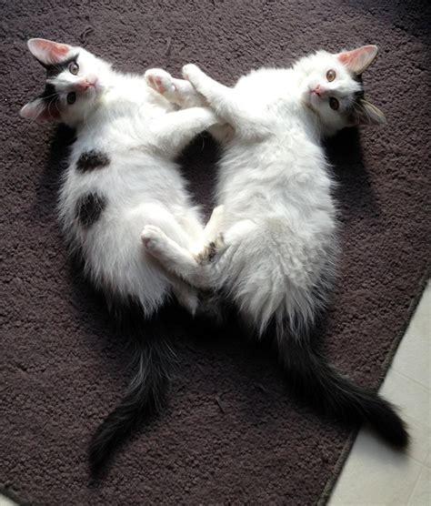 where can i adopt a near me pet adoption near me pets world