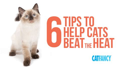 6 tips to help cats stay cool petcha