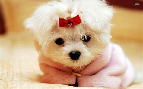 wallpapers  cute puppies  images