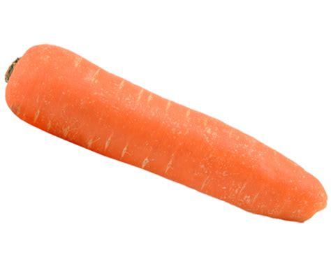 carrot kindersay