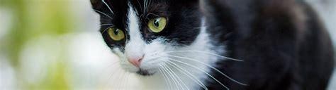 los gatos and cat hospital los gatos cat hospital in los gatos ca