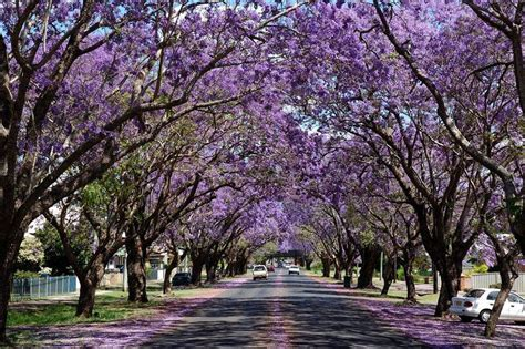 15 of the world s most beautiful tree tunnels and how to
