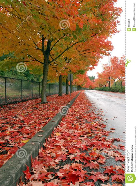 fall leaves   ground stock image image  yellow