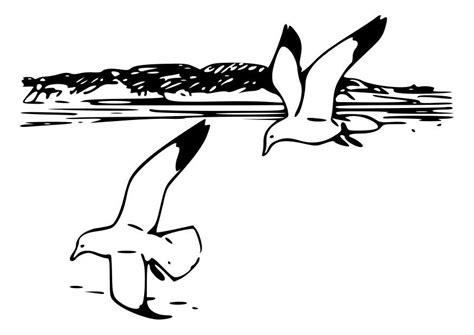 disegno gabbiano disegno da colorare uccelli gabbiani argentari cat 19013