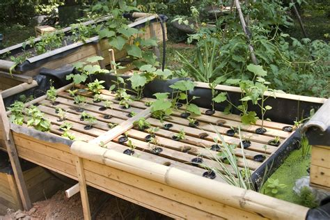 aquaponics backyard backyard aquaponics grow 10x more fruits and vegetables