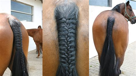 hairstyles for horses horse tail styles www imgkid com the image kid has it