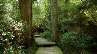 vancouver island botanical gardens tofino botanical gardens in tofino columbia expedia