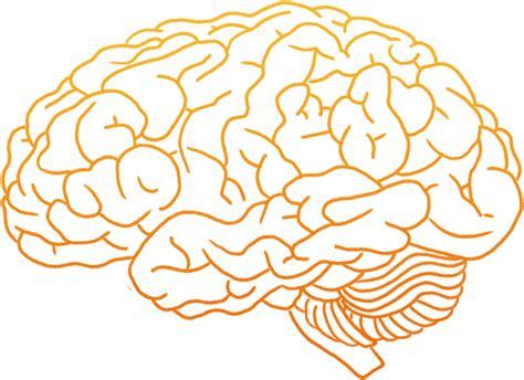 brain images ls genius natura che cura