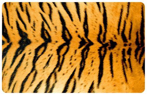 tiger area rug tiger print area rugs safavieh boh224a bohemian tiger print area rug black atg stores tiger