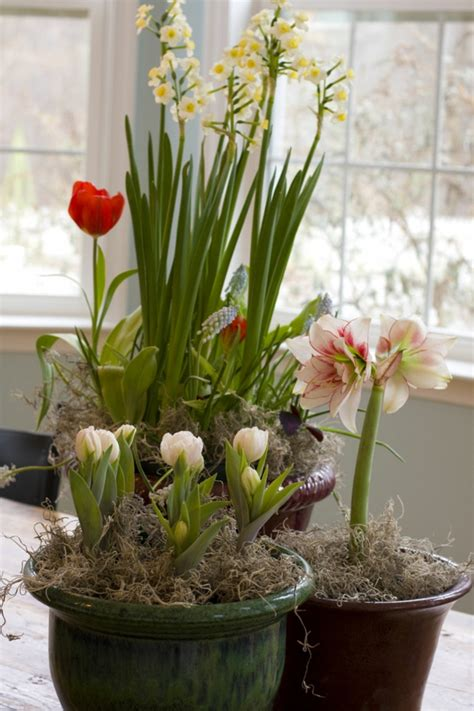 welche pflanzen für balkon terrasse bepflanzen dekor