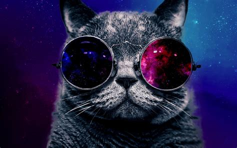 wallpaper cat with sunglasses 301 moved permanently