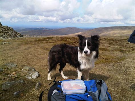 places that allow dogs friendly places to stay friendly lake district