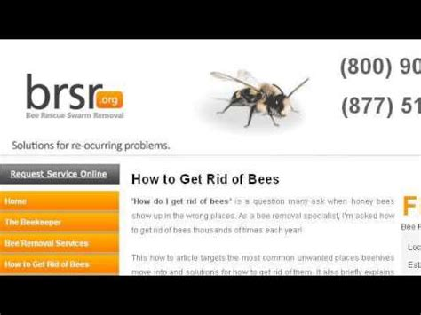 how to get rid of a beehive in your backyard how to get rid of moths from bee hives youtube