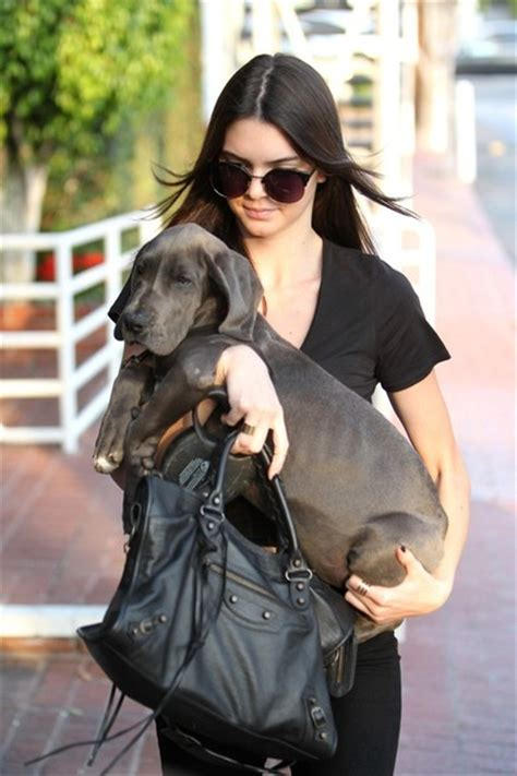jenner puppy the jenner take their shopping zimbio