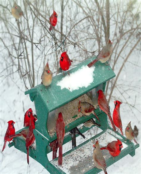 make your own bird table bird cages
