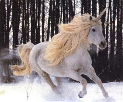 Imagenes De Unicornios Salvajes | lista criaturas sobrenaturales seres y animales