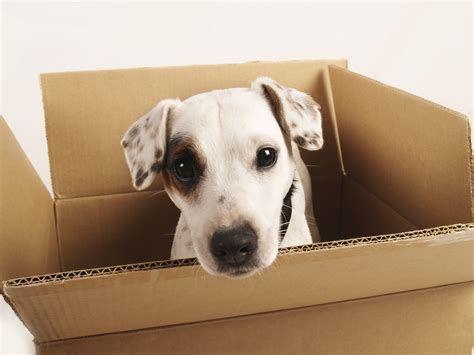 puppy box in box homeswithaltitude