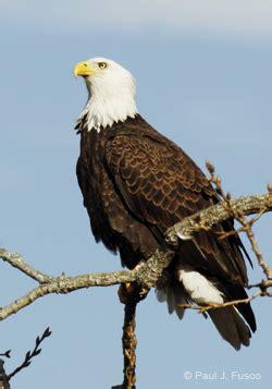 ct boating license age deep bald eagle fact sheet