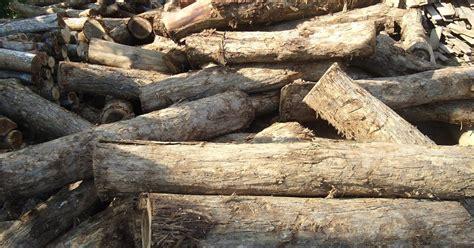 Harga Sariayu Rimba Sumatra harga kayu sonokeling duta rimba indonesia