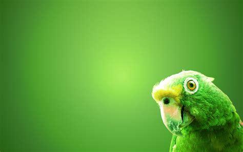 wallpaper green with birds most beautiful birds hd wallpapers