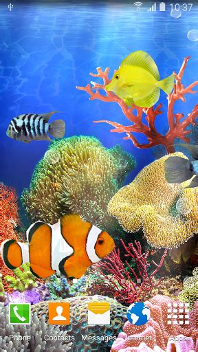 coral apk coral fish live wallpaper for pc
