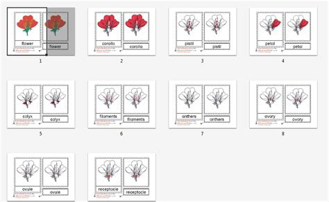 printable montessori cards montessori materials flower nomenclature cards age 3 to 6