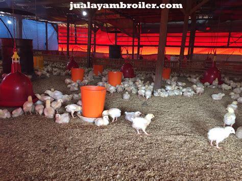 Jual Bibit Ayam Broiler Di Bogor jual ayam broiler di kayu putih jakarta timur jual ayam
